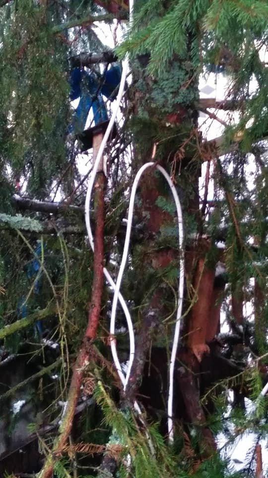 В Святошинском районе столицы вандалы повредили украшенные новогодние елки.