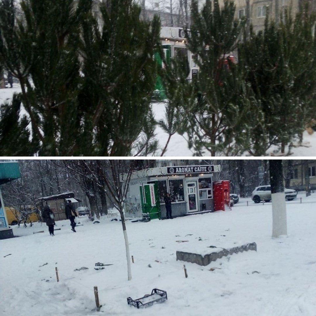 В Киеве  за неделю демонтировали 50 незаконных стихийных пунктов по продаже хвойных деревьев.