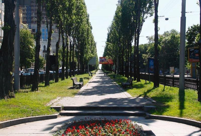 Как и когда в Киеве появились каштаны, Фото: IGoToWorld