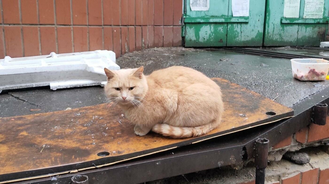 а Теремках разберут стихийный приют для кошек
