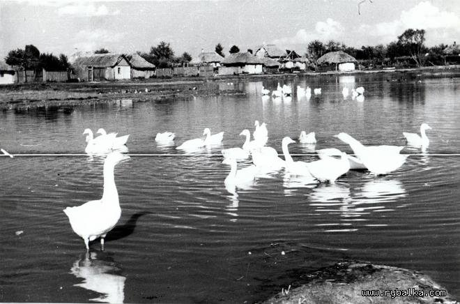 Общий вид села севера Киевской области 1950-1960 г.г., Фото:  Rybalka.com