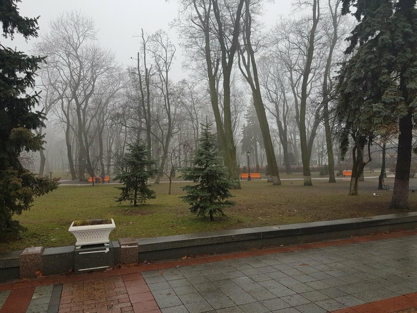 Деревья Городского сада: чем примечателен самый старый парк Киева, - ФОТО, Фото: Dennis