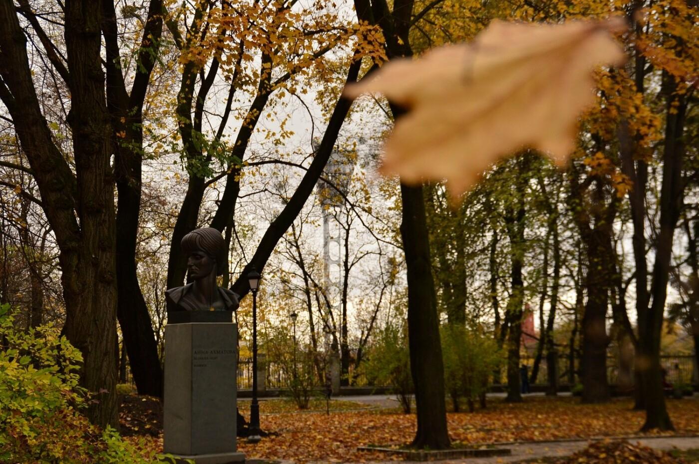 Деревья Городского сада: чем примечателен самый старый парк Киева, - ФОТО, Фото: miho S