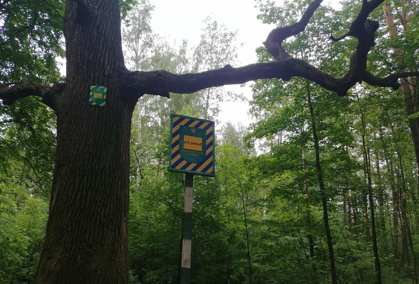 Тысячелетние дубы и липы: ТОП-10 самых старых деревьев Киева, - ФОТО, Фото: Anna