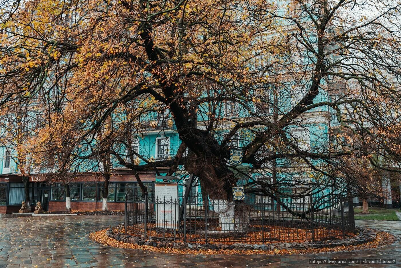 Тысячелетние дубы и липы: ТОП-10 самых старых деревьев Киева, - ФОТО, Фото: Shtopor7
