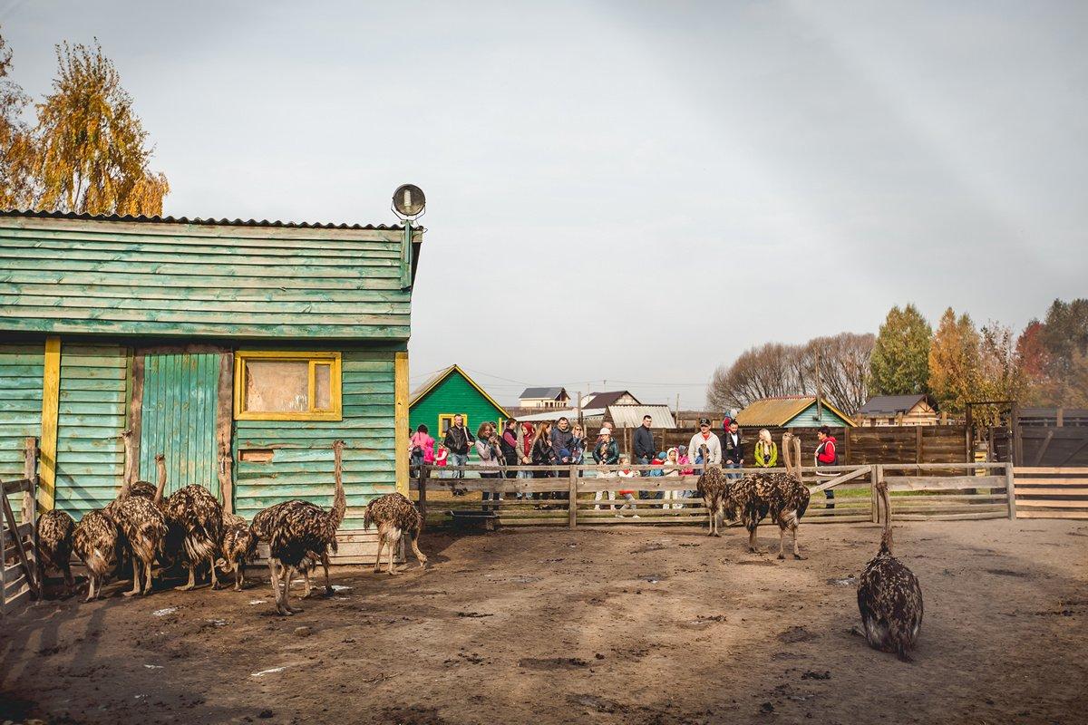Долина страусов под Киевом: что интересного в ясногородском мини-зоопарке, - ФОТО, Фото: Долина страусов