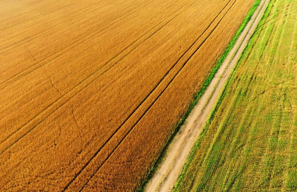Земельна реформа на Київщині: експерти відповіли на найрозповсюдженіші питання місцевих жителів , фото-1