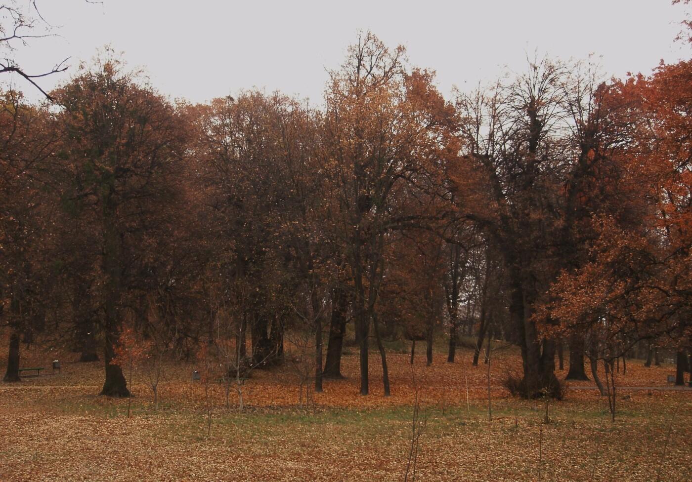 Горка Кристера в Киеве: как появился парк, где он находится и чем интересен, - ФОТО, Фото: Андрей Виноградарь