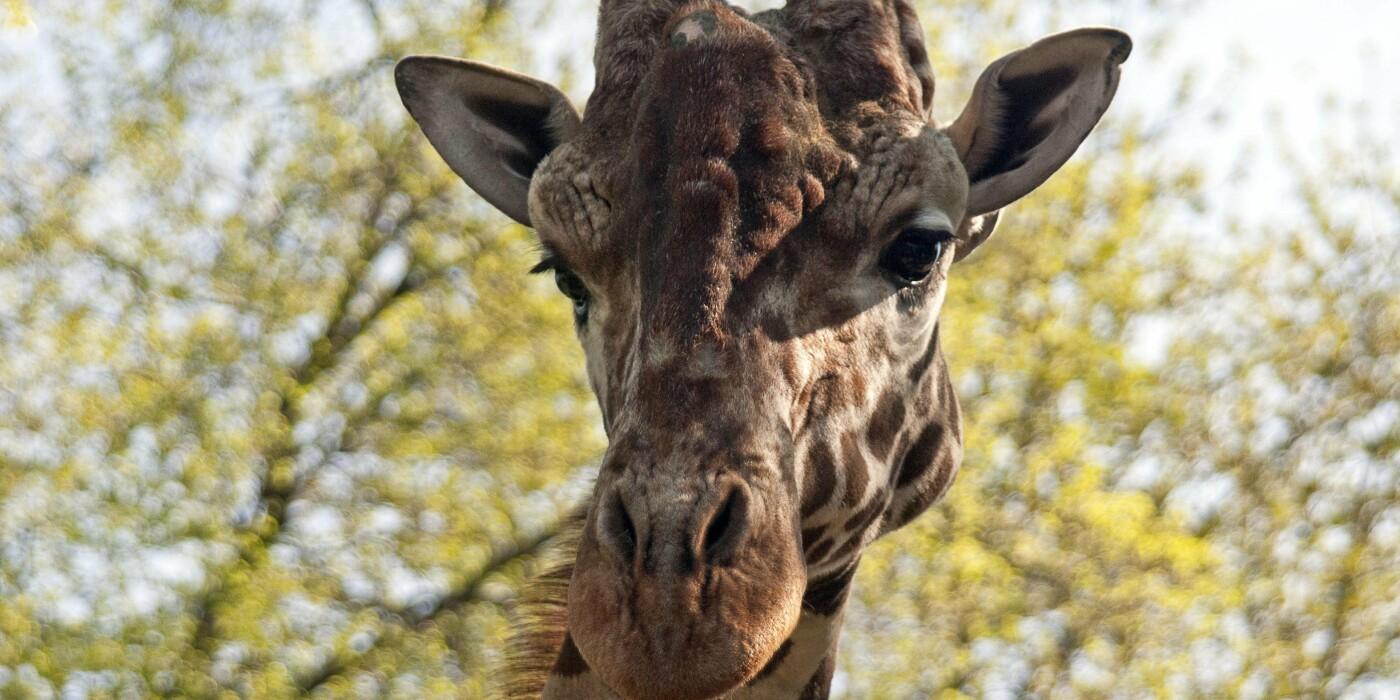Животные в Киевском зоопарке, Фото: zoo.kiev.ua