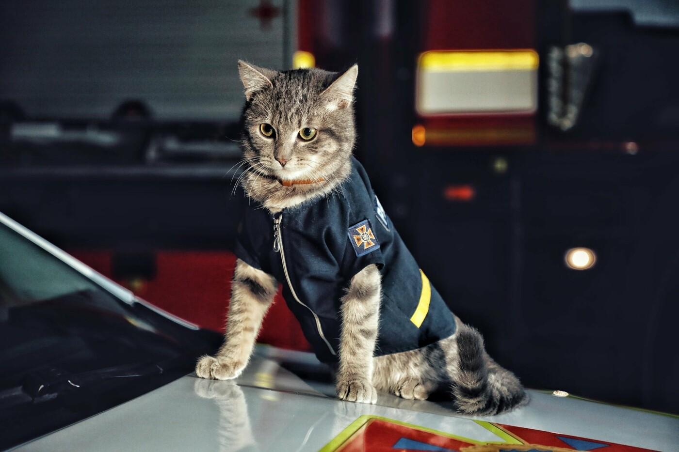 В Киеве кот получил звание майора ДСНС, Фото: пресс-служба столичных спасателей