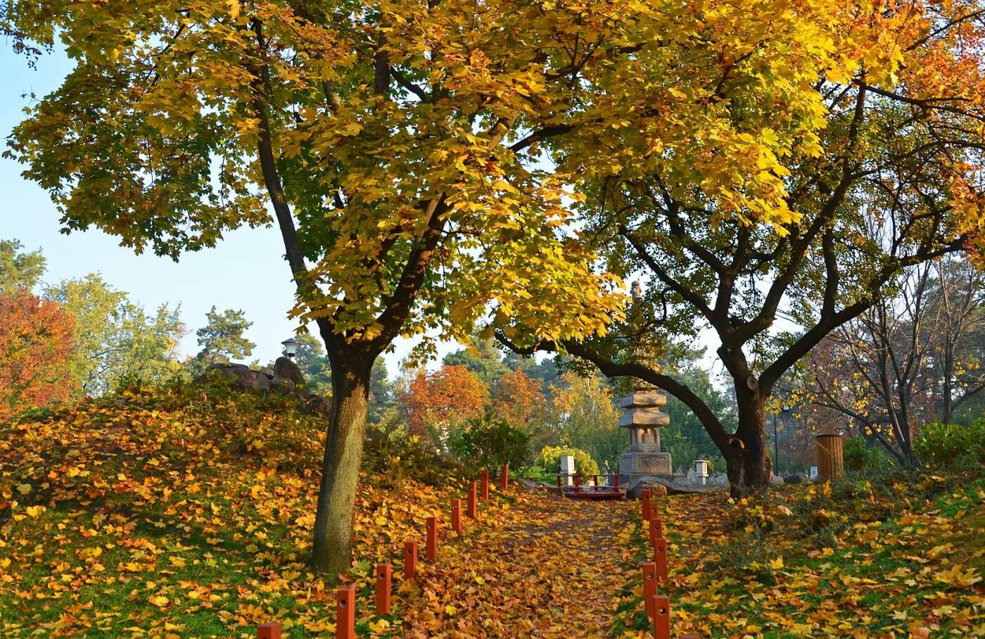 Цветущие сады японских сакур: парк «Киото» в Киеве и его уникальность, - ФОТО, Фото: Википедия