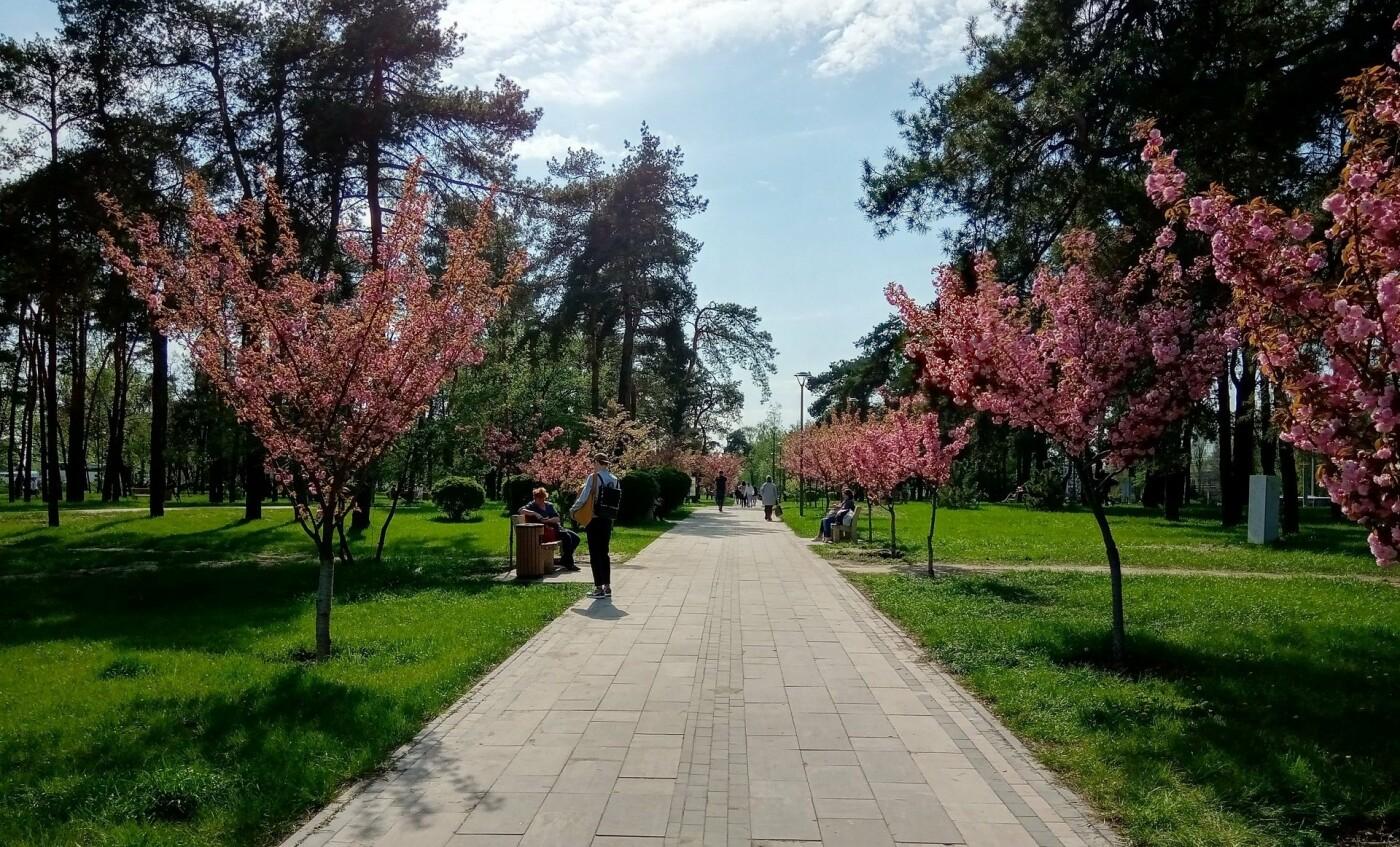 Цветущие сады японских сакур: парк «Киото» в Киеве и его уникальность, - ФОТО, Фото: Андрей Кролик