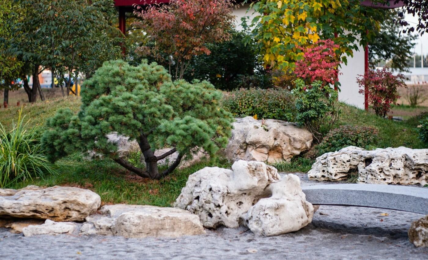 Цветущие сады японских сакур: парк «Киото» в Киеве и его уникальность, - ФОТО, Фото: Vitaliy Zaporozhets