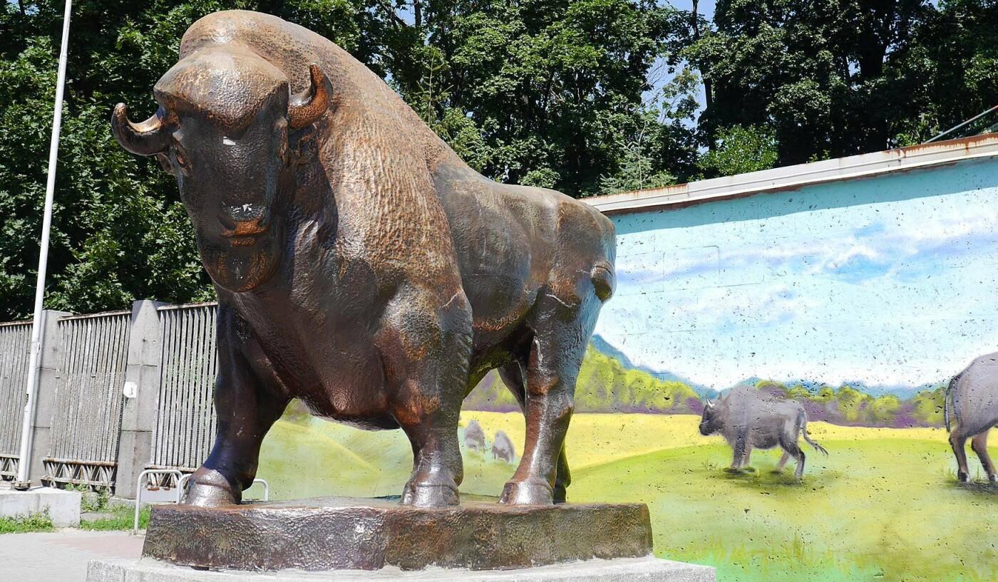 Киевский зоопарк: почему стоит посетить и как до него добраться, Фото: Кидпассаж