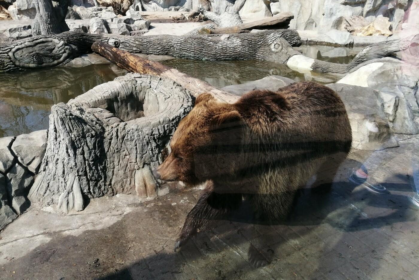 Киевский зоопарк: почему стоит посетить и как до него добраться, Фото:  Максим Погореленко