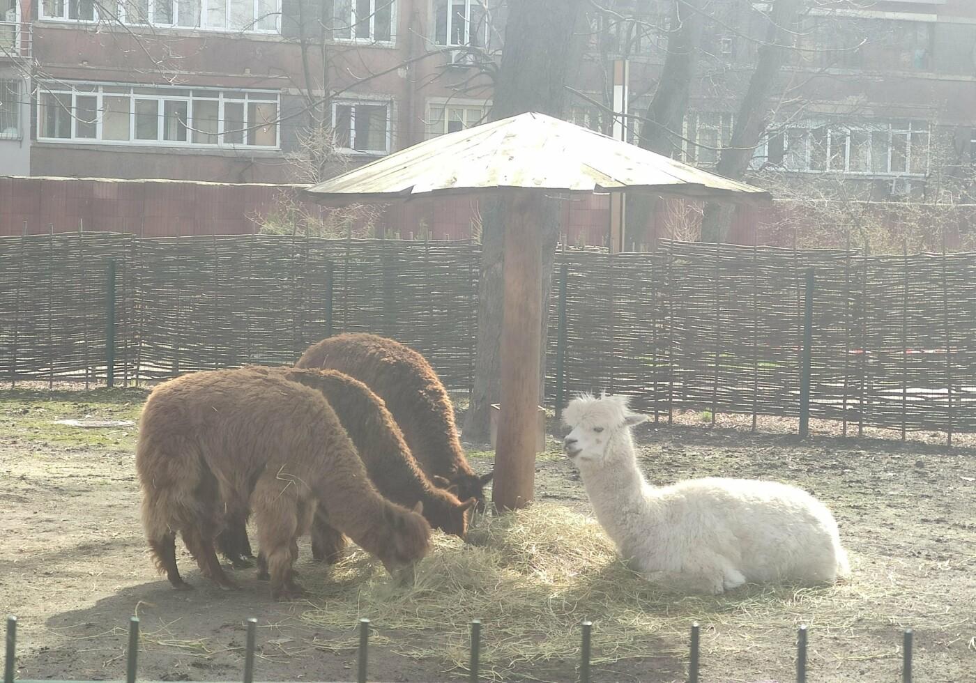 Киевский зоопарк: почему стоит посетить и как до него добраться, Фото: Вика Нес