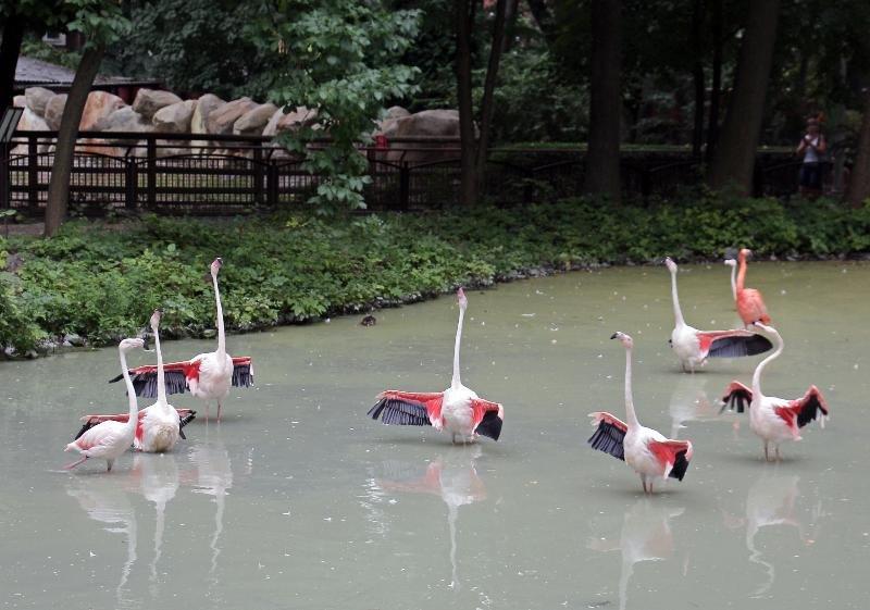 Киевский зоопарк: почему стоит посетить и как до него добраться, Фото: Київський зоопарк