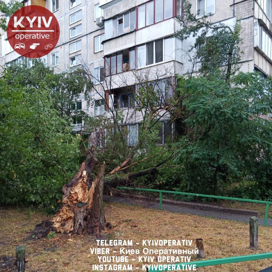 """В Деснянском районе дерево упало на жилой дом, """"Киев Оперативный"""""""
