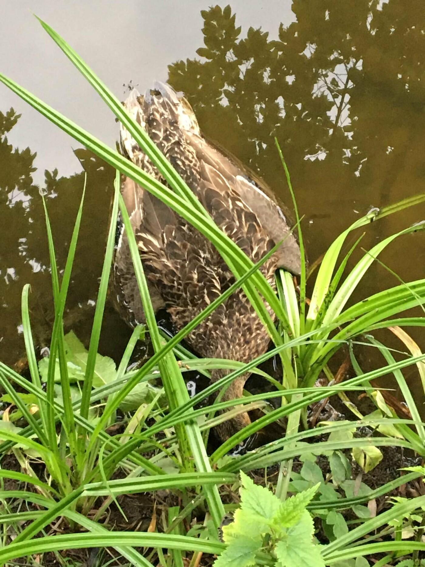 В Голосеевском парке массово гибут птицы и рыбы