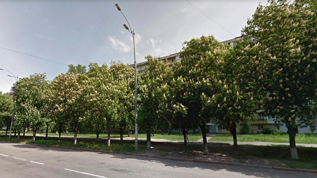 Каштановая аллея на одной из улиц Киева