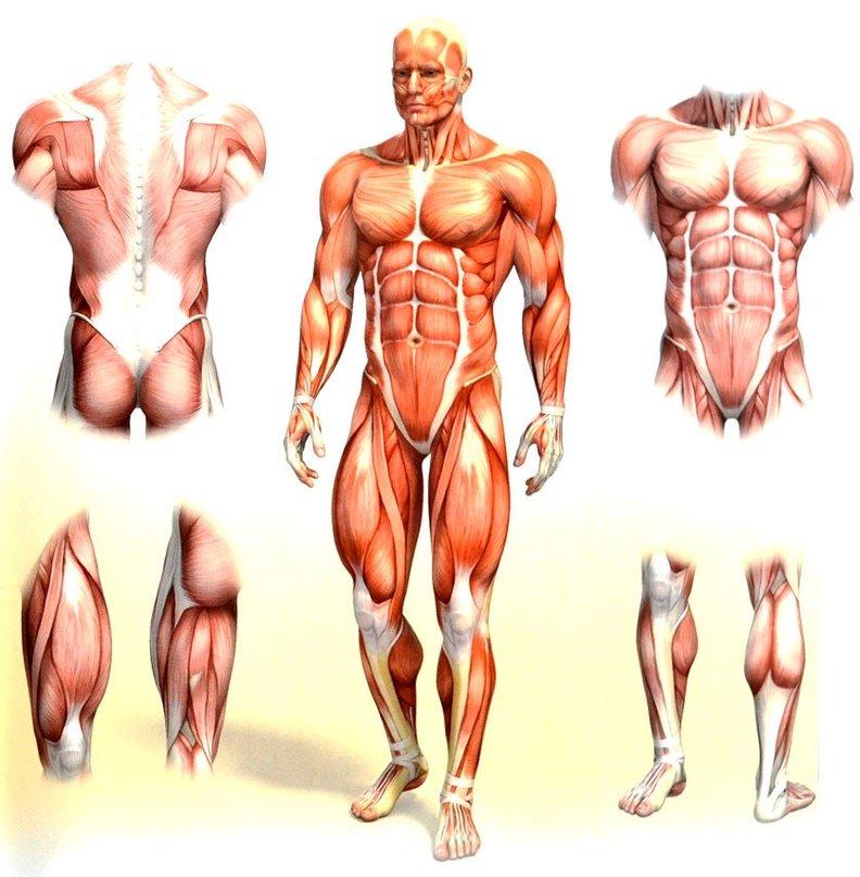 Как правильно качать мышцы в тренажерном зале